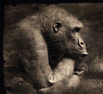 Torre della scimmia